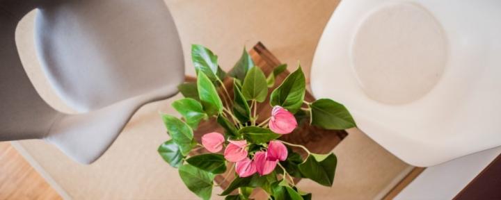 Dekoration – Pflanzen
